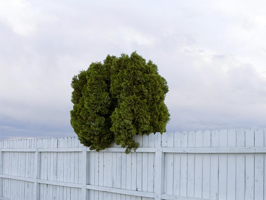 http://erikamiyagiwa.com/files/gimgs/20_ontario-tree.jpg